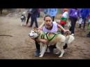 Я не буду больше бояться   Ездовой спорт   Собака лучший друг человека