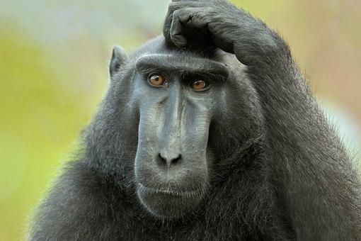 Навіть мавпи не матюкаються