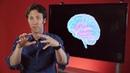 Мозг с Дэвидом Иглманом Фильм 4 Кто принимает решения