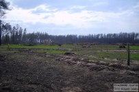 09 мая 2011 - Сгоревший лес в Тольятти спустя 9 месяцев
