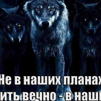 Анкета Константин Улевич
