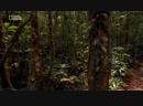 Свет на краю Земли. В сердце Амазонии (2009)