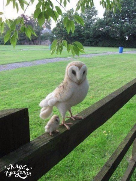 Маленький совенок с мамой (1 фото) - картинка
