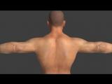 Все, что нужно знать о мышцах самомассаже и триггерных точках (перевод)