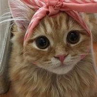 Аватар Ольги Селезневой