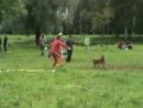 фризби Dog Frisbee Russia 13 09 09