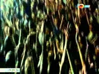 Ртуть (научно-популярный фильм, 2009 год)