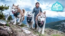 Husky Squad CLIMBING 4000 FT Spoiled in Glamping Hub Dog Friendly Cabin