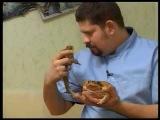 Жаба Ага (Bufo marinus) - ручные жабы питомника WTS