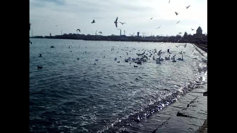 морская идиллия