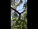 санитар леса