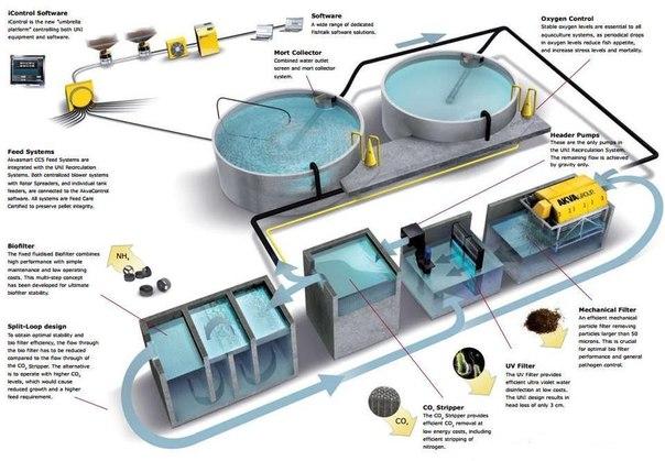Узв для выращивания рыбы схема оборудования своими
