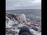 Фотограф и полярный медведь