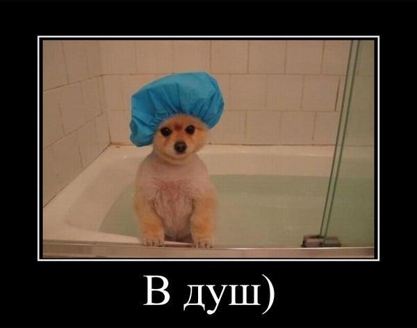Картинки про душ приколы, открытки
