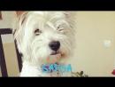 Блокнот Ростов подвел итоги голосования в конкурсе Самый обаятельный пёс-2018