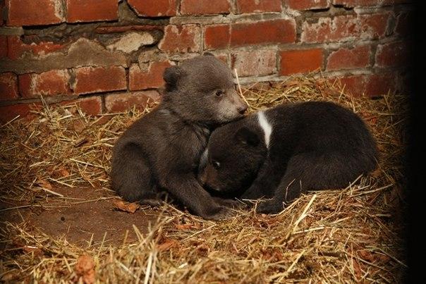 В среду из калининградского зоопарка в Тверскую область были отправлен