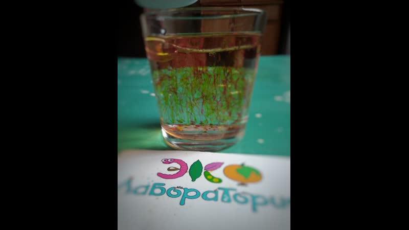 Фейерверк в стакане