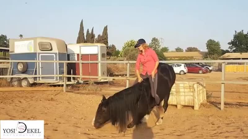 Так занимаются девчонки в Израиле - Yosi Dekel Horsemanship