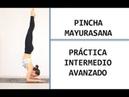 Yoga en casa: enfoque PINCHA MAYURASANA intermedio/avanzado | MalovaElena