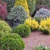 Сады цветов. Дача, сад, цветы, дизайн.