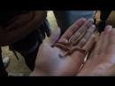 червячки
