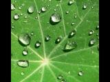 Dim Rkon - Sunny Rain
