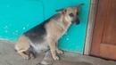 🔴Хозяева переехали бросив беременную собаку а она месяц ждала их под дверью…