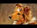 Рыжая собака муз А Гилева, сл Е Тепловой