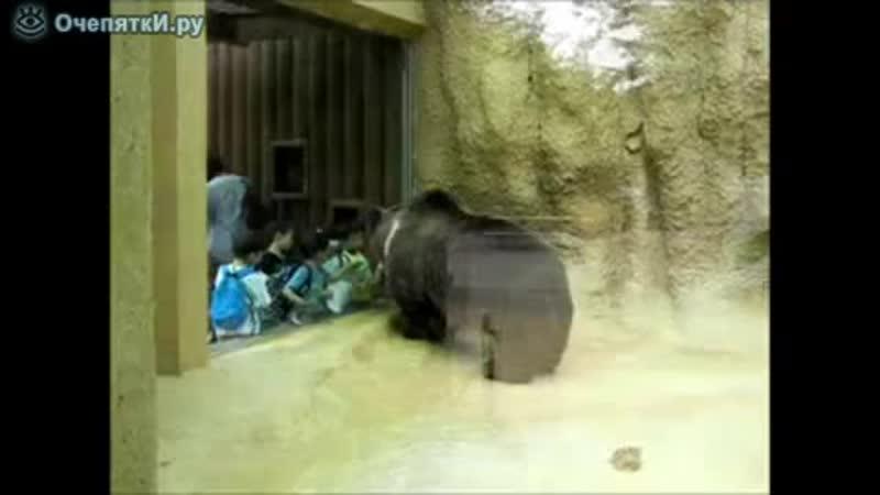 Медведь и дети в зоопарке