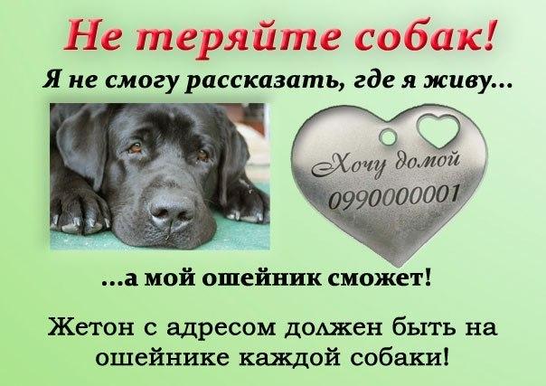 http://cs403929.vk.me/v403929517/b2f5/kumg5Ms1zLA.jpg