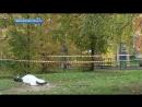 В Московской области застрелена женщина - старший следователь МВД Евгения Шишкина.
