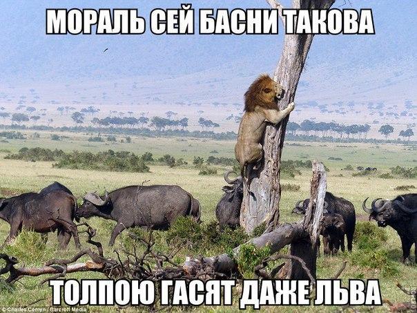 Вашингтон поддерживает позицию Порошенко по возвращению Крыма и Донбасса, - Госдеп США - Цензор.НЕТ 9143