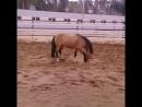 Мы такие разные клип под живых лошадей.mp4