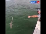 Гигантский групер проглотил пойманную рыбаками акулу