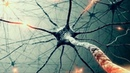 Масовая МАНИПУЛЯЦИЯ сознанием - зеркальные нейроны