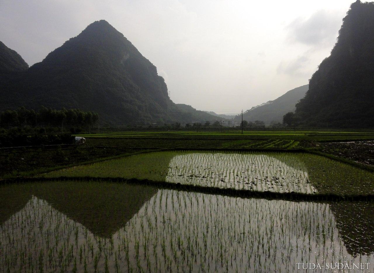 Рисовые поля, Китай