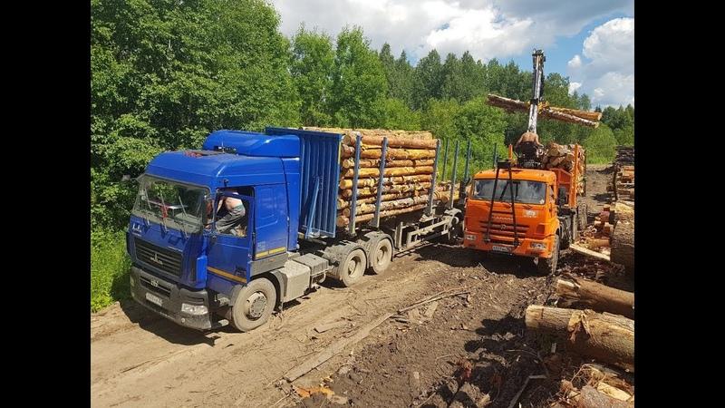 Заготовка и вывозка леса [часть 1]. МАЗ, КамАЗ, УРАЛ, Ponsse, Doosan.