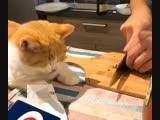 Котенька и лук