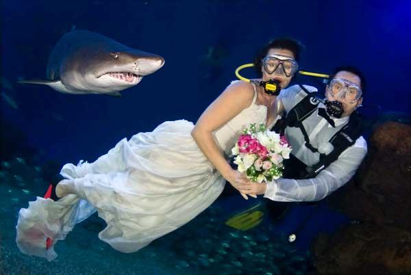 Туристы и акулы