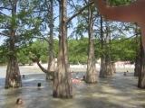 озеро Сукко в горах Кавказа где в центре озера растут кипарисы!!!сказочное место, красота неописуемая, мы были в сказке!!!