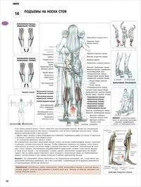 Это базовое упражнение способствует наращиванию массы и объема всех мышц бедра.