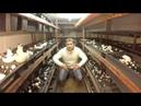Бизнес в гараже Выращивание Шампиньонов