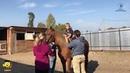 Реабилитация для особых детей с помощью конных прогулок проходит в Приморском городе Большой Камень. Филиал Дальневосточной организации инвалидов...
