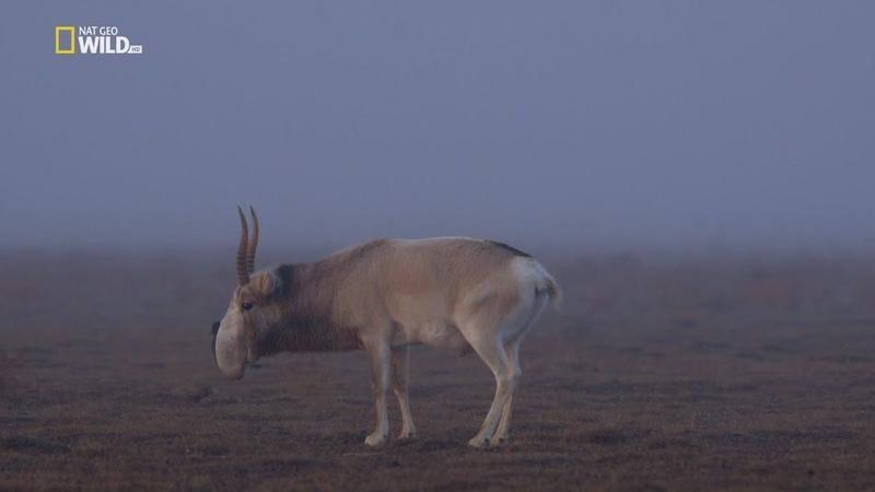 Nat Geo Wild: Человек и природа. Равнины (1080р)