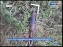 Артиллерийский снаряд нашли в лесу Шелеховского района
