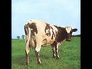 Pink Floyd Atom Heart Mother Suite Dogs Echoes and Shine On You Crazy Diamond