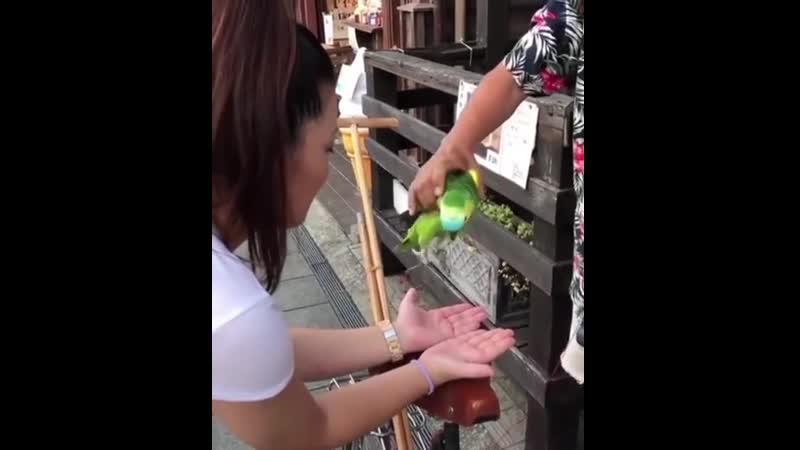 Пташки ^ | Милый попугай