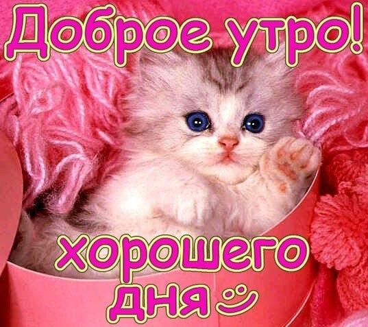 http://cs543104.vk.me/v543104523/2c11/2i5fcnmMA8Q.jpg