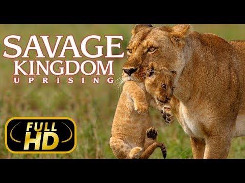ДИКОЕ КОРОЛЕВСТВО: ВОССТАНИЕ - ВЛАСТЬ ПРЕДАТЕЛЕЙ Еп3 / FULL HD - Док. Фильм 2018 Amazing Animals TV