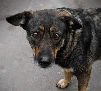 Кошек и собак в Актобе отстреливали на глазах у детей